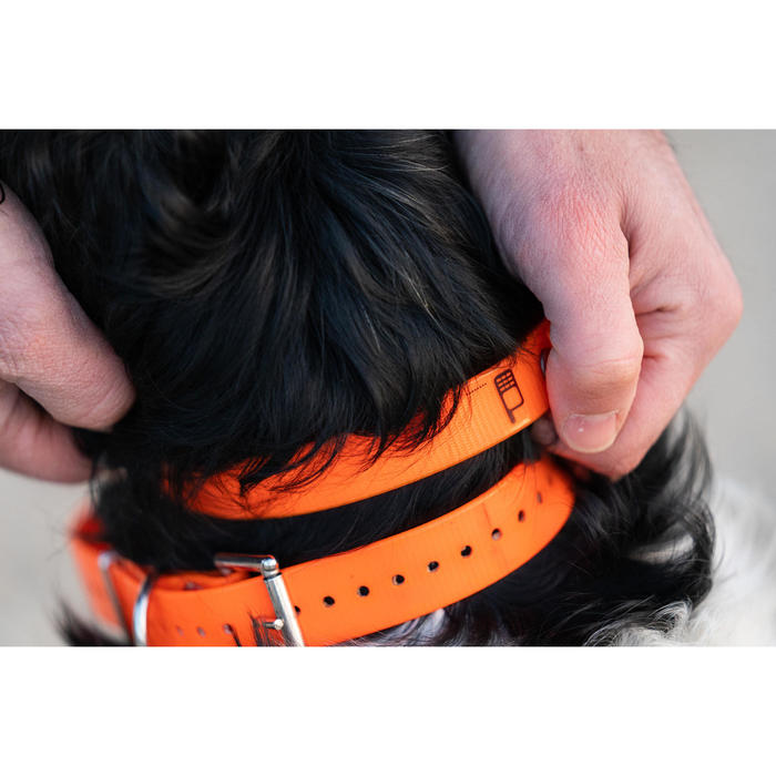 Hundehalsband 500 neonorange