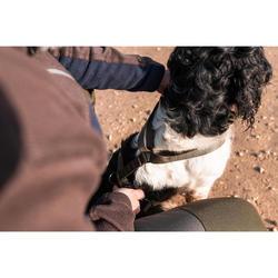 Harnais chien chasse kaki