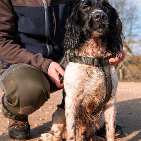 Un chien de chasse tenu en laisse par son maître