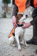 Аксессуары для собак Охота - Жилет для собаки 100  SOLOGNAC - Виды охоты