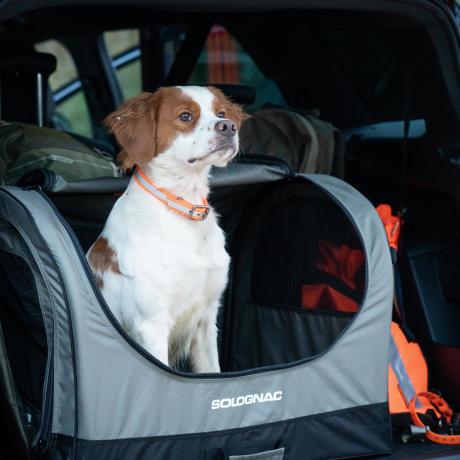 Un épagneul breton attendant dans une caisse à chien