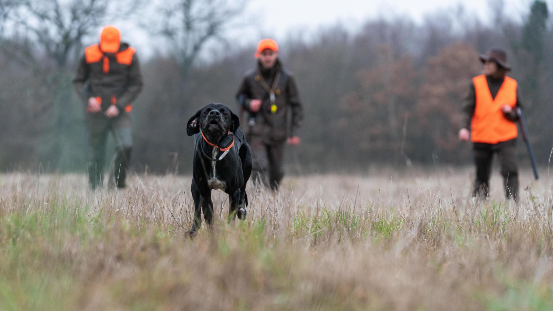 Un pointer et des chasseurs dans le fond dans un champ