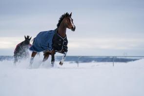 Winter-Regendecke.jpg