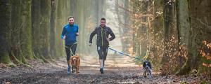 running canicross man