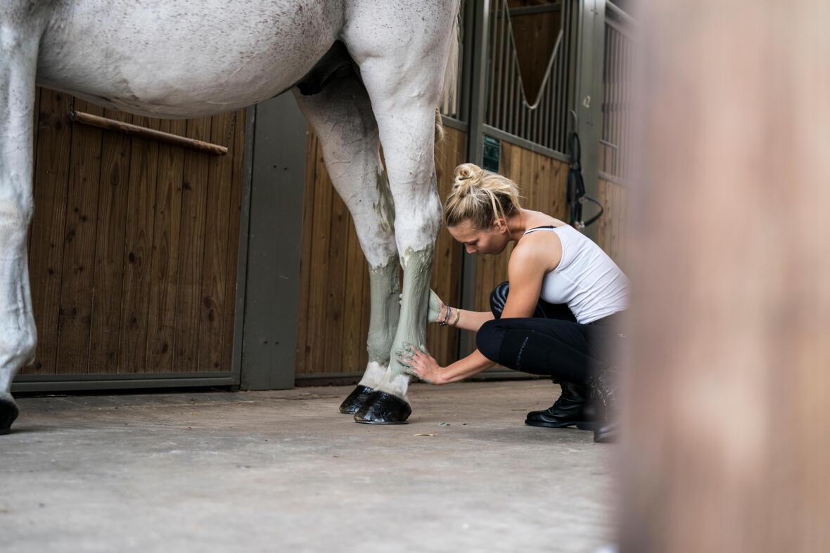 Alt/entretenir les membres de son cheval