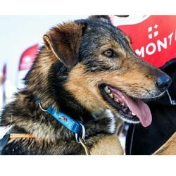 Verstelbare hondenhalsband voor canicross met hond Summit blauw