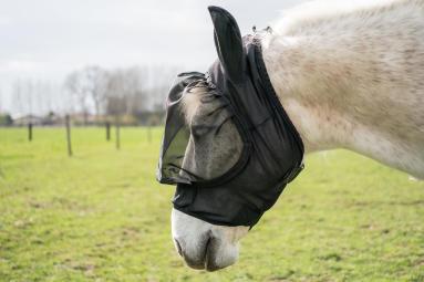 Hoe kies ik een paardendeken?