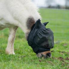poney avec un masque anti-mouche dans un pré