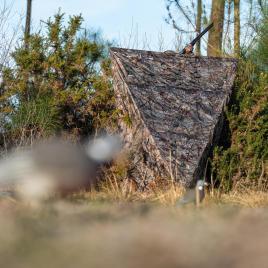L'affût bouclier Solognac pour la chasse des pigeons ramiers et palombes