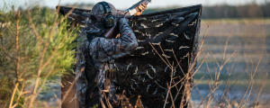 Préparation de l'affût pour la chasse aux pigeons ramiers