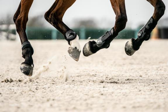 Alt/l'anatomie du cheval