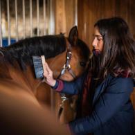 bien-etre-pansage-cheval-equitation-fouganza-1