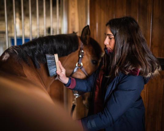 Alt/Soins du cheval | Fouganza