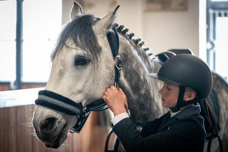 Winner Horseback Riding Halter for Horse and Pony - Navy