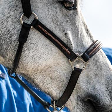 cc un licol pour cheval