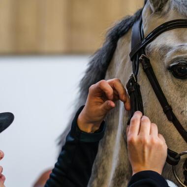 équitation : cuir ou synthétique bridon