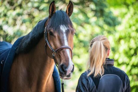 rythme-respiratoire-cheval-santé
