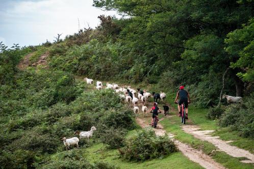 sortie-VTT-en-famille-nature-mouton