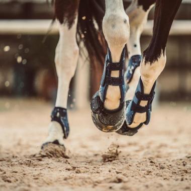 Hufglocken Pferde