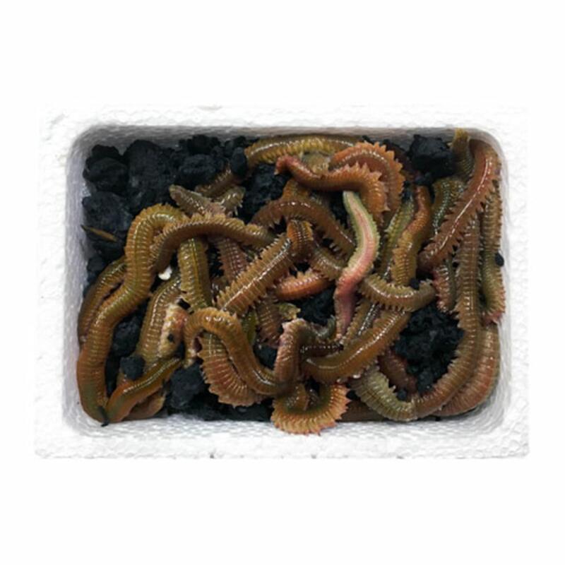 Cebo de pesca coreano 20 gramos