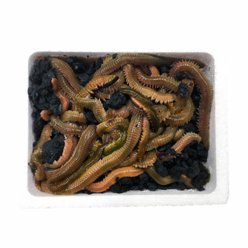 Cebo de pesca coreano 45 gramos