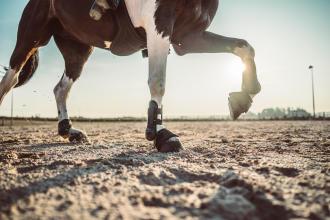 Comment travailler le galop de son cheval ?