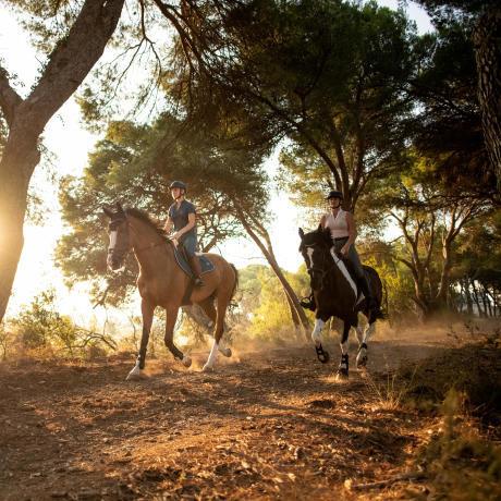 bien-être-cheval-au-travail-equitation-fouganza-decathlon-7