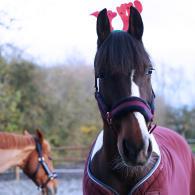 Alt/idée cadeau cheval