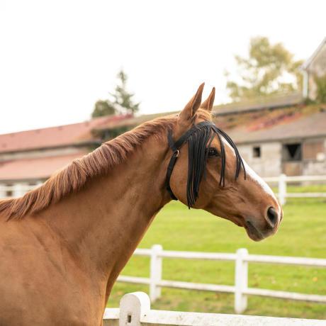 Proteger_mon_cheval_des_insectes