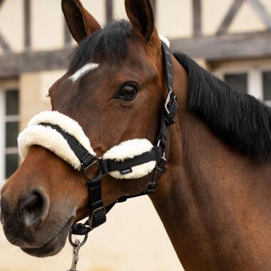 Come scegliere la capezza per il cavallo