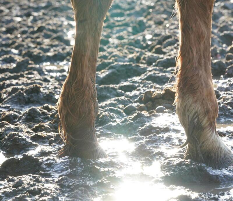 Alt/soigner la gale de boue