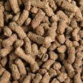 Táplálékkiegészítők Lovaglás - Biotine - 1 kg FOUGANZA - Lovaglás