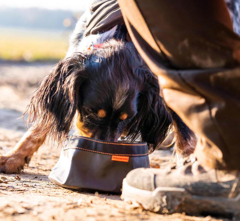 Come scegliere l'alimentazione del cane da caccia
