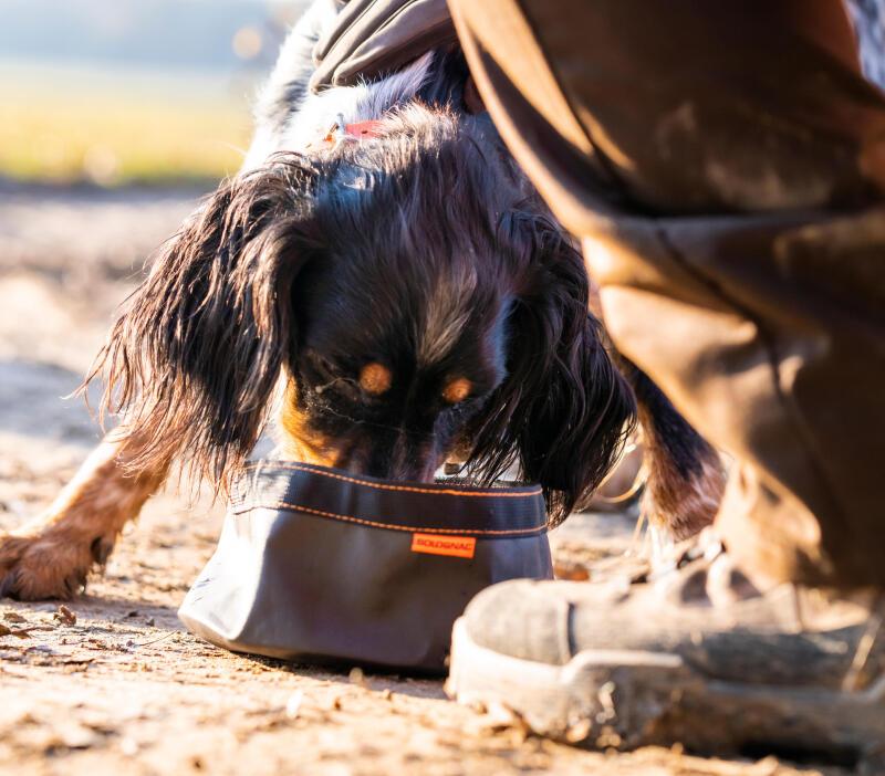 De porties hondenbrokken afstemmen op jouw hond