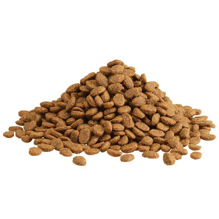 Alimentation chien Adult Regular 12kg