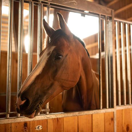 hebergement_cheval_box