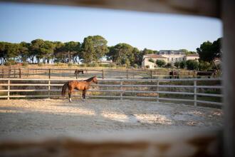 Canicule : rafraîchir son cheval quand il fait chaud