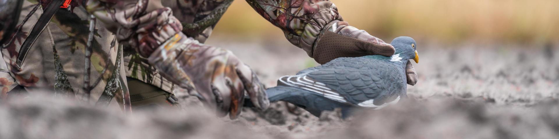Les premières et nouvelles formes de pigeon ramier Solognac