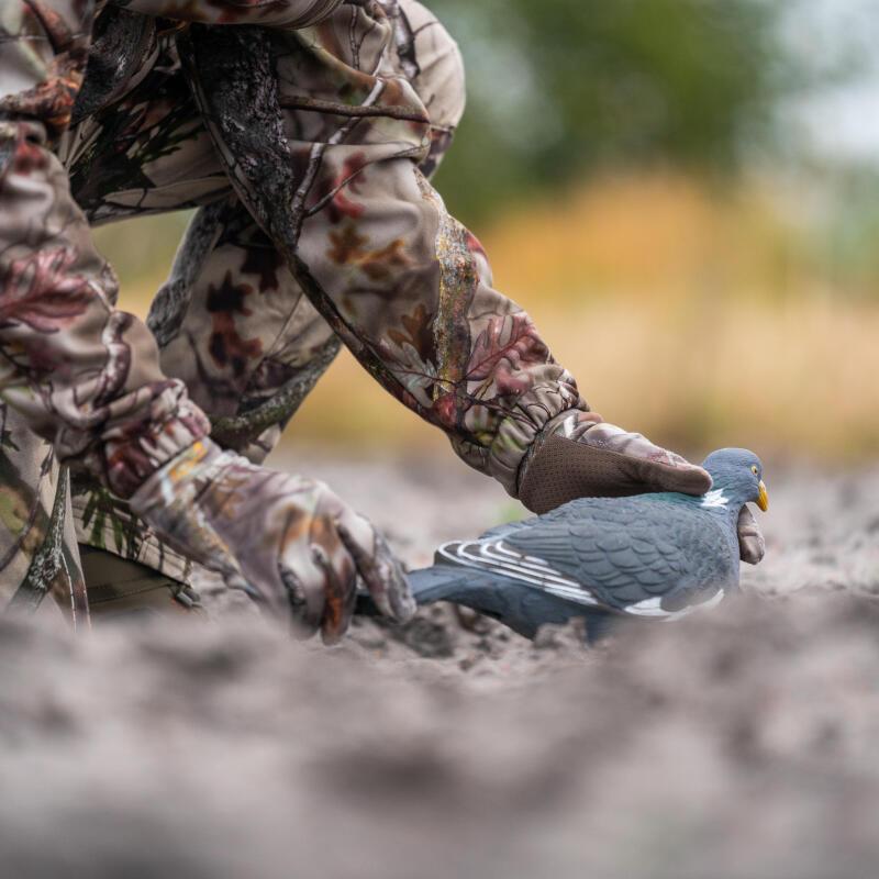 Les premières formes de pigeon ramier Solognac : une nouveauté 2020