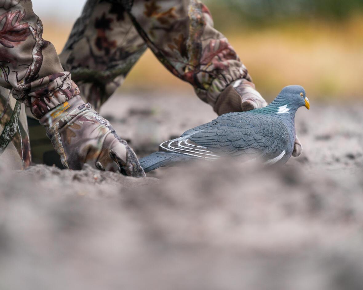 Forme de pigeon pleine Solognac