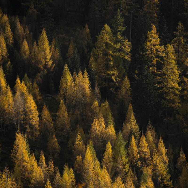 comment-reconnaitre-les-arbres-en foret