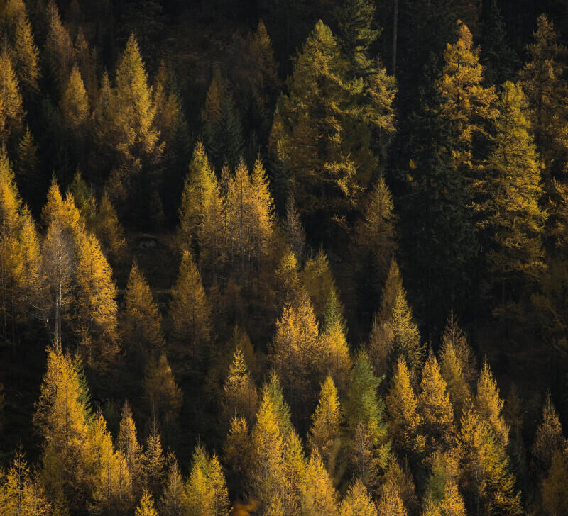 how-identify-the-trees-in-the-forest