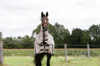 Voelt je paard zich goed in de weide?