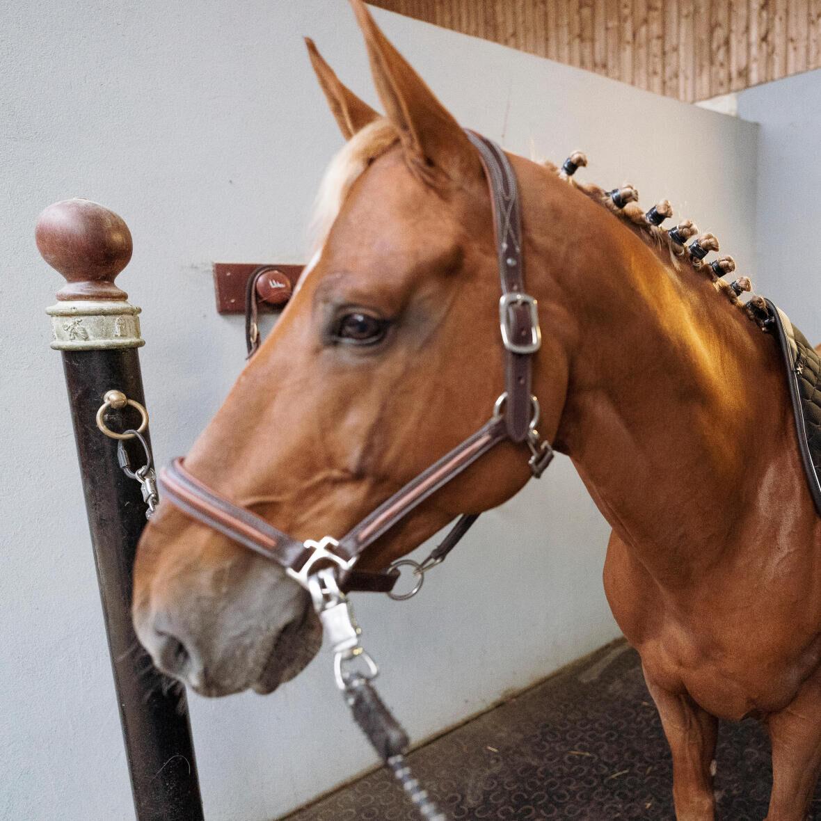 gezondheid-paard-observatie-hoofd