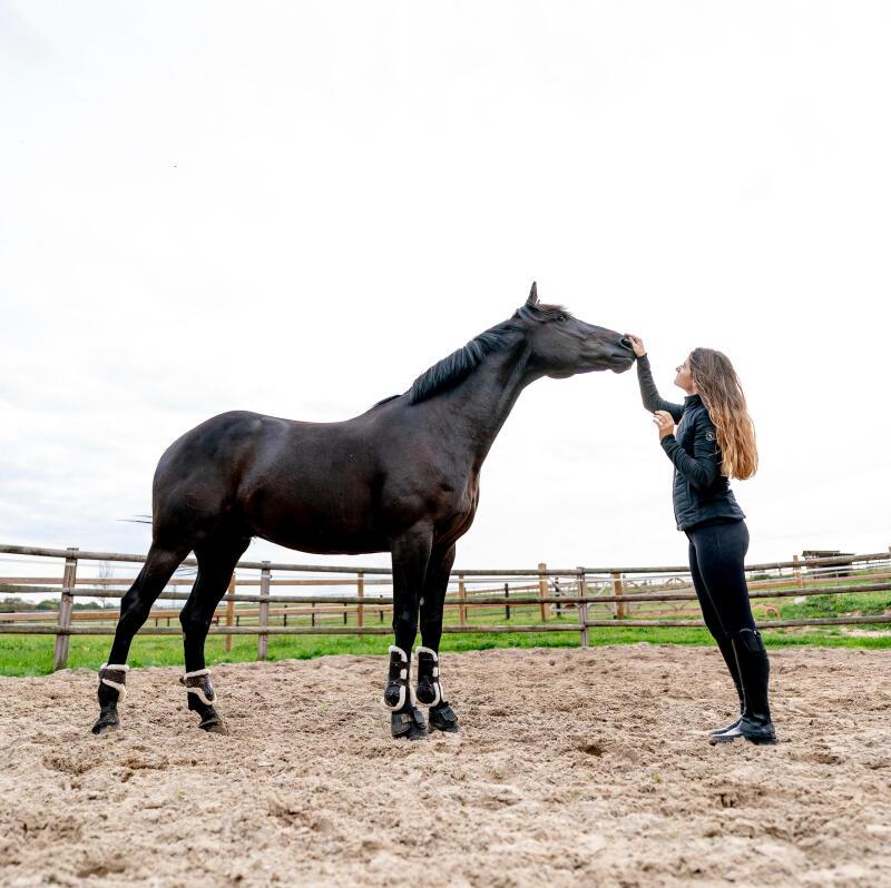 travail-à-pied-TAP-équitation-cheval-fouganza