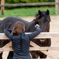 cheval-santé-massage-équin