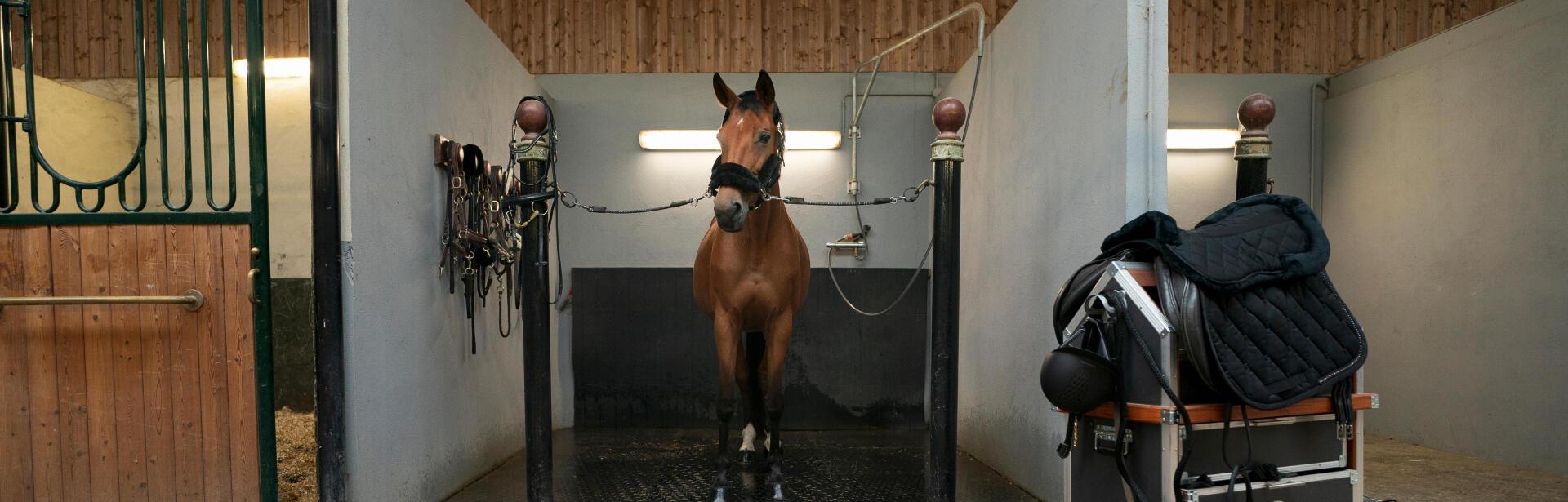 Les soins du cheval