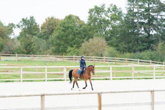 Découvrez les exercices pour assouplir votre cheval