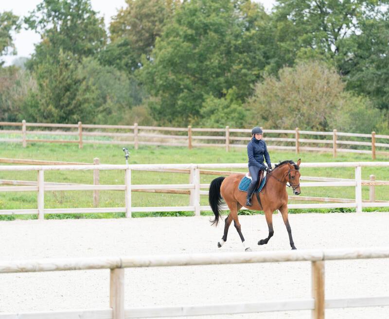 Ontdek onze lenigheidsoefeningen voor je paard