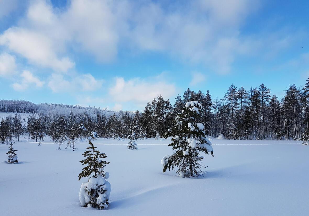 4 domaines de ski nordique à explorer dans le Jura